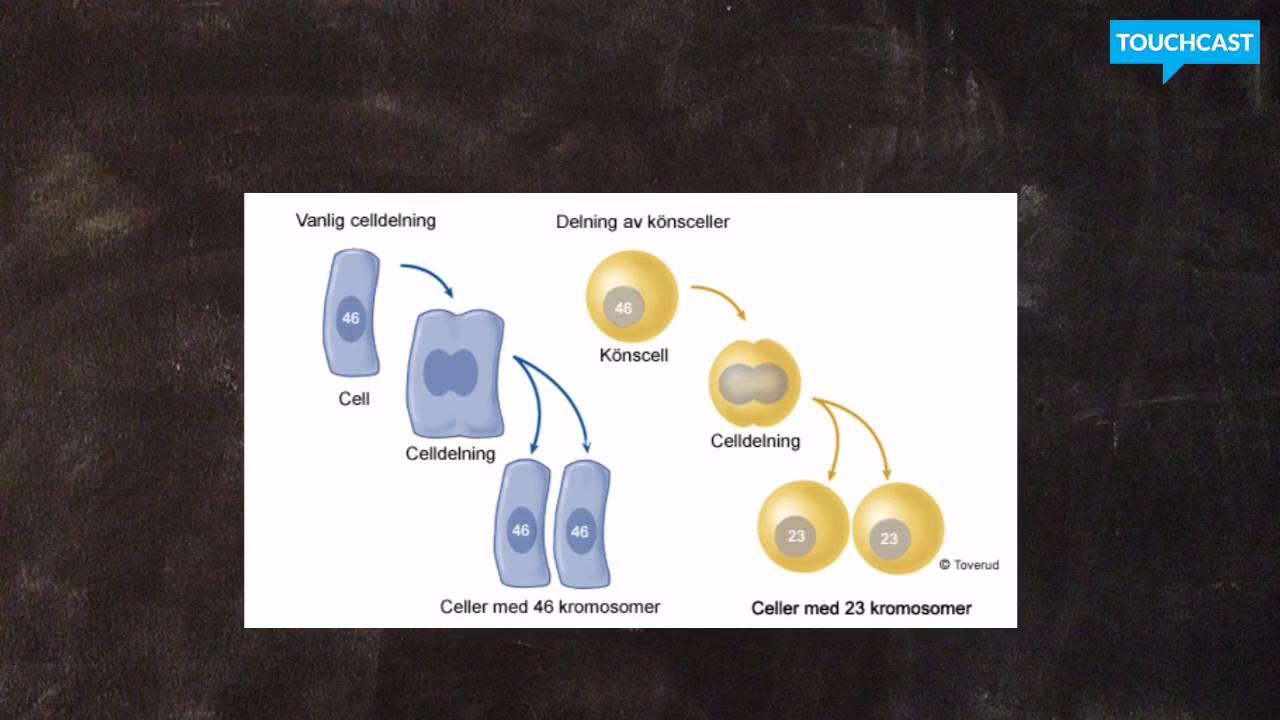 DNA och kromosomer