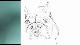 Auto Draw 2: Boston Bull Terrier