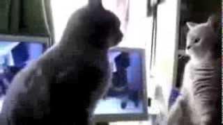 КОТЭ ДИСКОТЕКА  Смешные кошки танцуют   Лучшие видео приколы с кошками