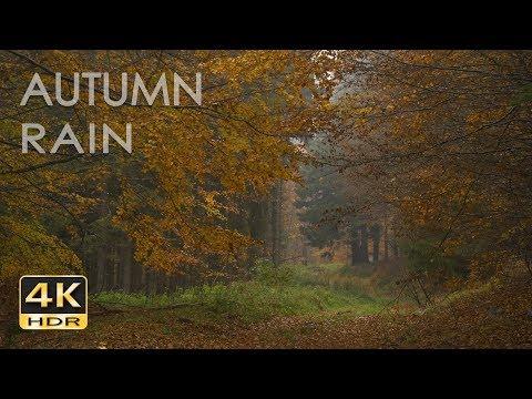 4K HDR Hujan Musim Gugur - Suara Hujan Santai Di Dedaunan Hutan - Video Alam