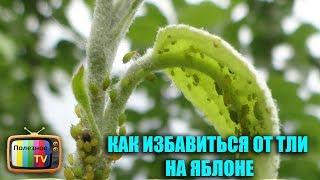 видео Что делать, если появилась тля на яблоне? Как бороться с вредителем? Препараты от тли