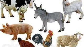 рынок сельхоз животных минск