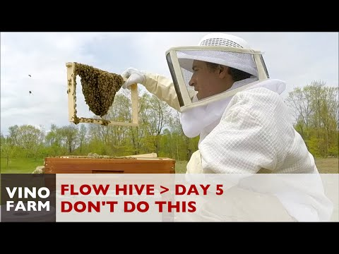 Flow Hive - Bee keeper FAIL (Lessons Learned) - Day 5