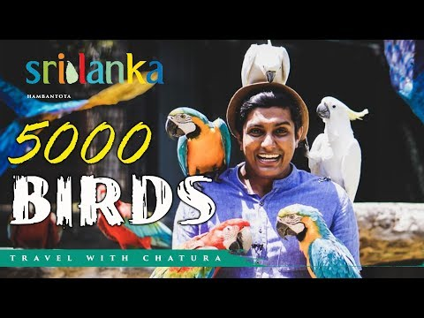 South Asia's Largest Bird Paradise -Traval With Chatura (Vlog 212) [EN Sub]