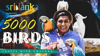 South Asia's Largest Bird Paradise -Traval with Chatura (Vlog 212) [EN Sub] Thumbnail