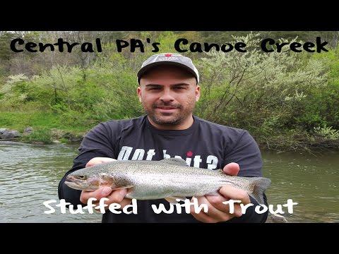 Trout Fishing Pennsylvania's Canoe Creek