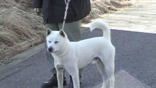 紀州犬ゴン太とゆかいな仲間達http://muhoumathu.blog.ocn.ne.jp/blog/