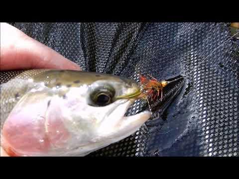 Covid Fishing
