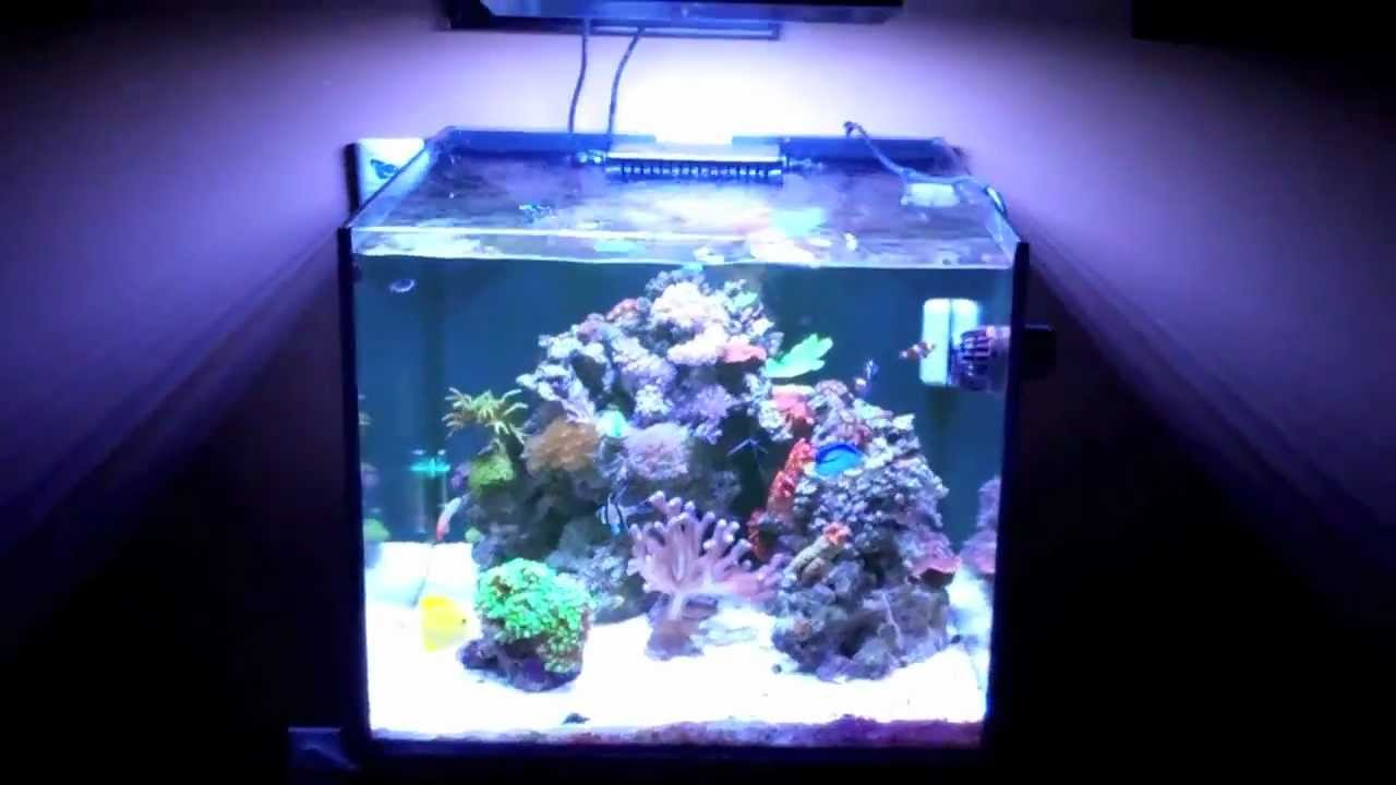 50 gallon reef cube update youtube for Cube saltwater fish tank