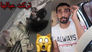 حالة انقاذ 🐈 قطة ولدت بحمامات محطه بانزين 😫