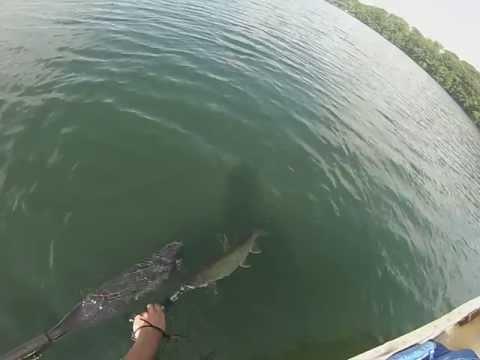 7/21/13 Kensico Lake Trout 2 - W/ Release