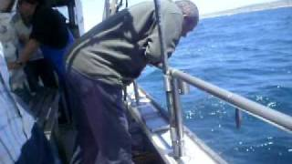 Video pesca mestre inacio o homem que sabe fazer engordo para pescar pargo download MP3, 3GP, MP4, WEBM, AVI, FLV Desember 2017