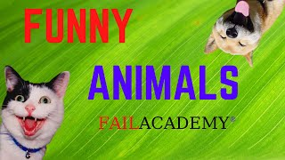 Best Of Funny Animal Fails Complitation 2020 | Try Not To Laugh 😻