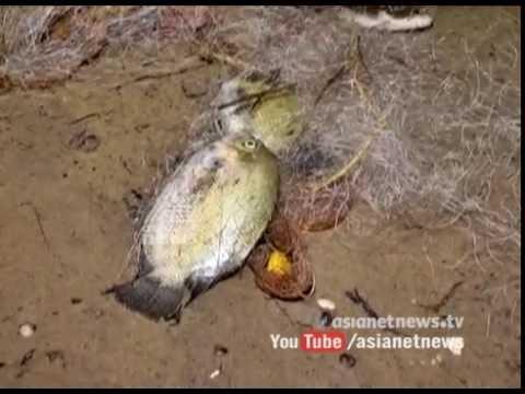 Fishing using toxic substances at Kollam paravur