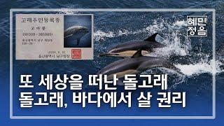 우리의 욕심으로 수족관에 갇힌 돌고래들 '돌고래…