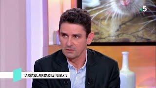 Rats : la grande invasion ? - C l'hebdo - 23/03/2019