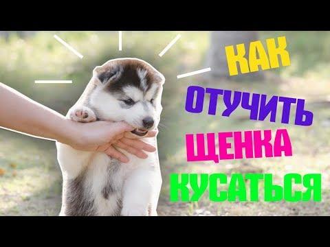 Как щенка отучить кусаться