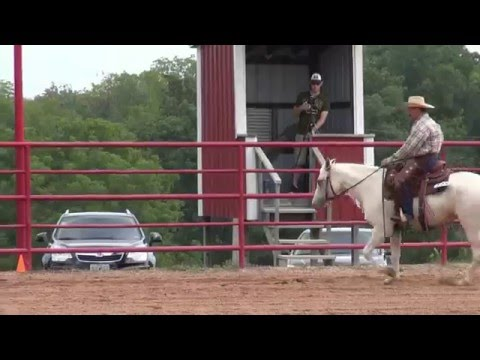 AVA 2012 Western Pleasure Open Missouri Foxtrotter