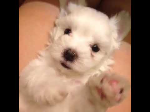 小狗打噴嚏 - YouTube