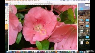 09 Blur Sharpen Smudge tools Photoshop Tutorial