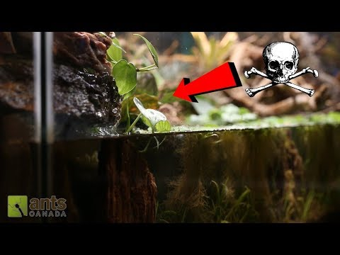 DEAD ANTS vs. WHIRLPOOL WATERFALL