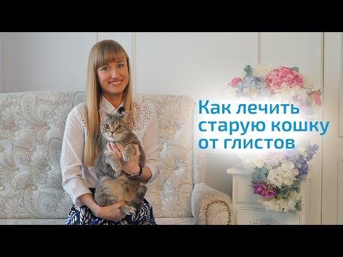 Глисты у кошек: лечение — Кот Обормот