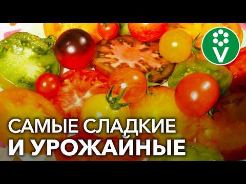 Вопрос: А вы сажаете в помидоры сорта Гилгал Насколько хорош сорт?