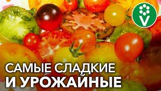 50 сортов томатов в одном видео! Экскурсия в теплицы коллекционера сортов томатов