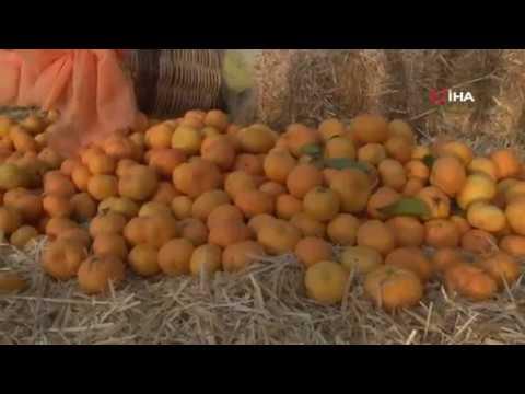 Mandalinanın başkentinde festival coşkusu yaşandı