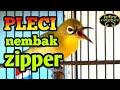 Pleci Nembak Zipper Sangat Cocok Untuk Masteran Pleci Agar Cepat Gacor  Mp3 - Mp4 Download