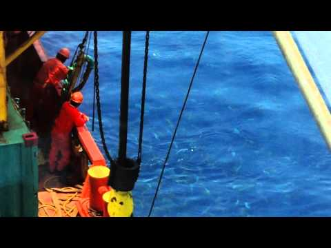 Fishing from a Dive Support vessel at the Gulf of Mexico .