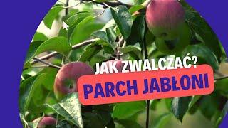 Zwalczanie parcha jabłoni i regulacja zachwaszczenia w sadzie produktami CIECH Sarzyna