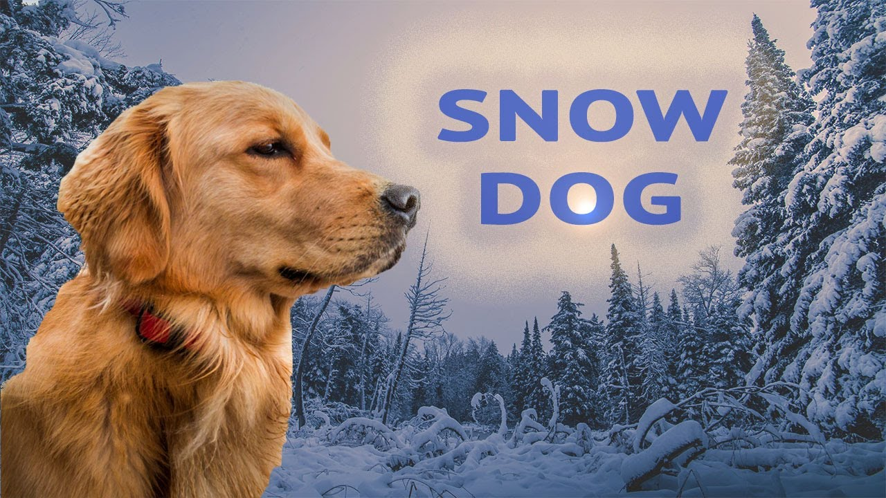 cali-s-new-winter-dog-boots-for-snow-and-ice