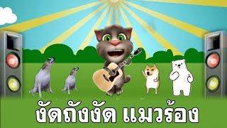 งัดถั่งงัด  เต้ย อธิบดินทร์ Cover แมวร้องเพลง ตลกอย่างฮ่า