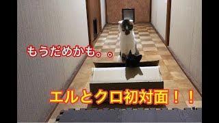 【猫LIFE】元野良猫どおしの初対面 thumbnail
