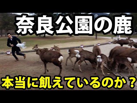 【奈良公園】鹿せんべいの売上が減少したと聞き、散布してきた