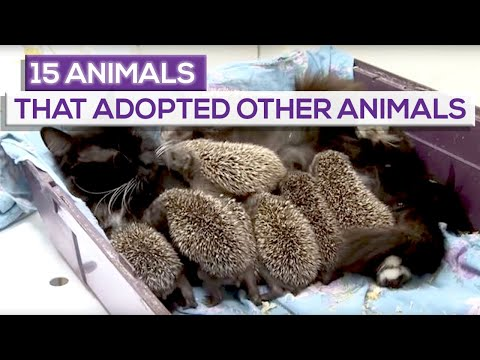 15 Animals That Adopted Other Animals!