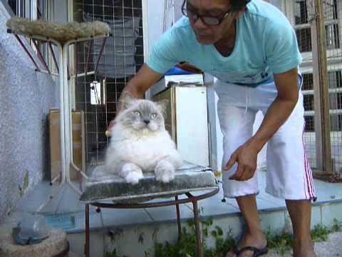 Cara Merawat Kucing Bulu Panjang Dengan Benar Funnycat Tv
