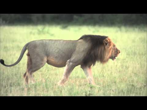 The Nxai Pan Experience in Botswana - Safari Sun