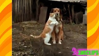 Best Couple - Cat and Dog