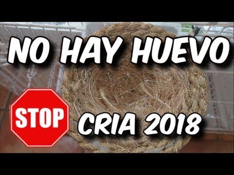 SOTP CRÍA 2018, NO HAY HUEVO