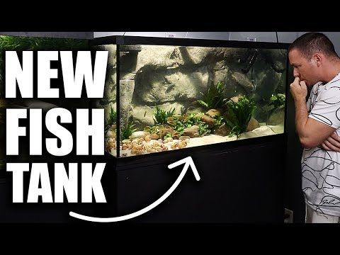 I LOVE THIS AQUARIUM!! Mixed African Cichlid Fish Tank Scape