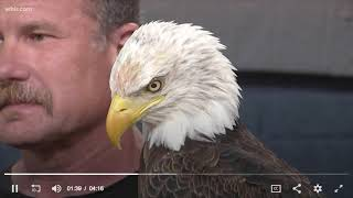 Video American Eagle Day - from WBIR Knoxville - June 20, 2018 download MP3, 3GP, MP4, WEBM, AVI, FLV Juli 2018