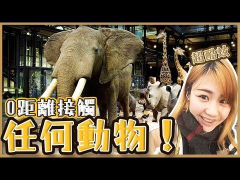 【法國旅遊vlog】0距離接觸任何動物?!『超有趣』法國國立自然史博物館!Muséum national d'Histoire naturelle|Utatv