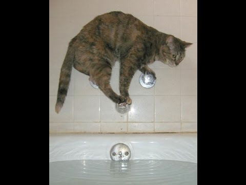CUTE CATS AFRAID OF WATER |COMPILATION