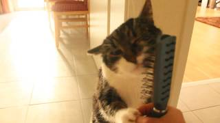 Cat brushes herself (very cute)