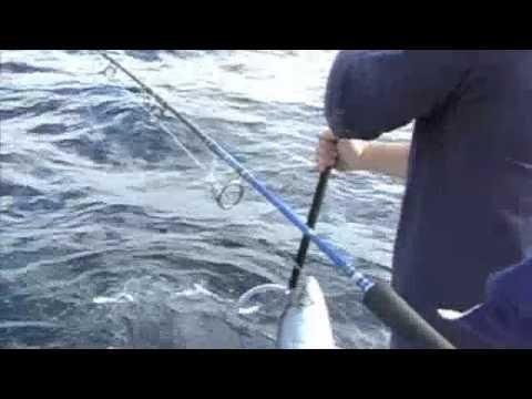 Jigging Kingfish - Sydney King Nuggets - Long Reef Pirates