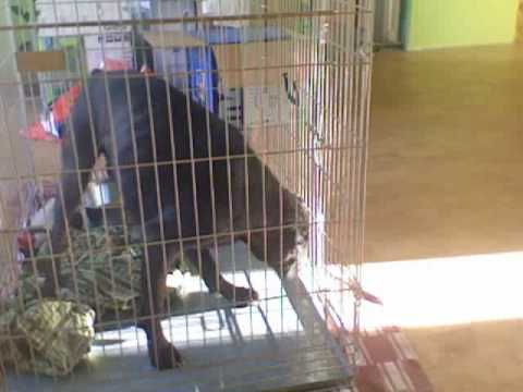 Dog Escapes Kennel Like A Boss