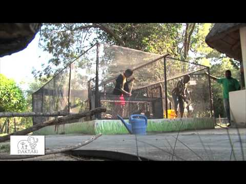 volunteer, animals, children, South Africa, kruger, help others