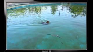СОБАЧКА В ФОНТАНЕ НЕ ТОНЕТ ;) Dog in the fountain does not sink;)